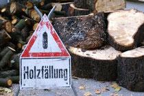 Gefahren beim Baumfällen