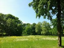 緑が豊かな春のベルリン。市内には大きな森や公園がたくさんあります。