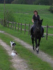 Reiter mit zwei Hunden am Pferd