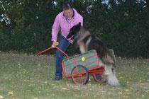 Canis im Wagen