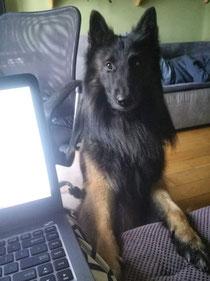 Ein aktuelles Foto von Canis seinem Sohn Bruno. Ein wunderschöner Hund. Dufte gemacht Canis und Bijou