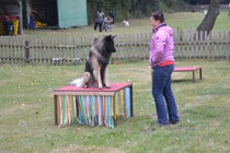 Canis auf dem Tisch