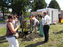 Pflanzung des Gingkobaums durch den Bürgermeister von Beelitz, Herrn Knuth