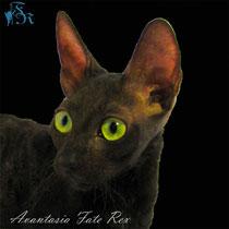 Cattery Fate Rex
