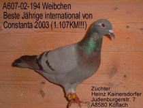 1. Jährige Taube Constanta 2003
