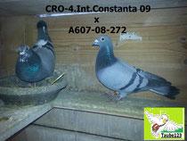 CRO-4.Int.Constanta 2009 x Azurro Linie