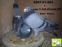 1. Nat. Constanta x 1. Intern. Constanta 2005