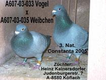 3. Nat. Constanta 2005