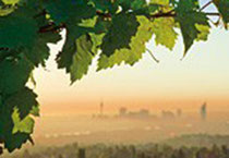 Der Wein und Wien