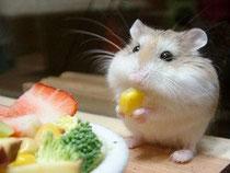 Hámster c omiendo verduras-ansiedad