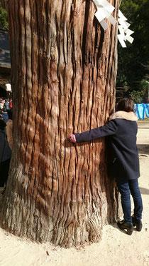 境内の杉の木