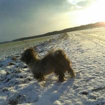 Mirós erster Schnee in Österreich