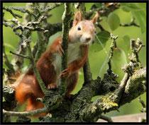 Hemmi in unserem alten Birnbaum