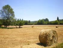 plaine agricole de St Cirq