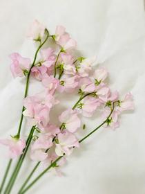 今日の花材