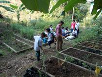 畑でハーブを植える子どもたち。