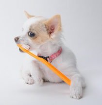 почистить зубы собаке кошке саратов