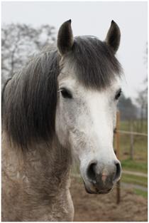 Welsch-Pony, Navi, Hanne Wagner
