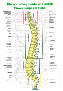 Das Bild zeigt die Abschnitte der Wirbelsäule (Quelle: MKV-Detensor)