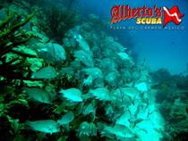 Playa del Carmen Reefs