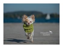 www.dackelandmoredogs.de