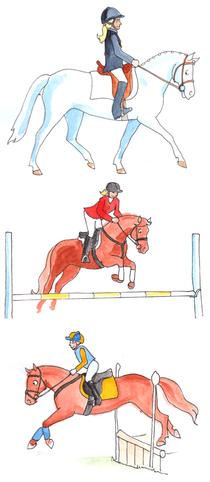 Die Disziplinen der Englischen Reitweise: Dressur, Springen und Vielseitigkeit.