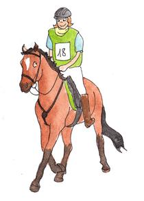 Beim Distanzreiten legen Pferd und Reiter Strecken bis zu 160 Kilometer zurück.
