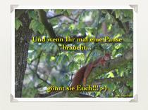Methapher Raus aus dem Hamsterrad: Ein Eichhörnchen liegt völlig außer Atem auf einem dicken Ast und streckt alle Viere von sich.