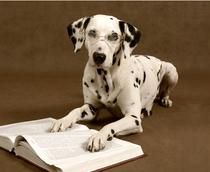 Conseils de soins avec l'aloé véra de LR pour les animaux: