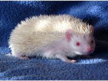 Albino (Foto: Jürgen)