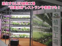 """進化するLED植物工場 """"店産店消""""レストランや家庭でも!"""