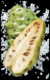 NONI  die Superfrucht aus Tahiti