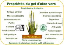 aloe vera et vitamines et minéraux
