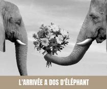 A chaque semaine, son moyen de transport original pour les mariés ! Dos d'éléphant