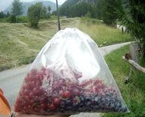 Waldbeeren Blaubeeren Johannisbeeren Alpen Italien Südtirol E5 Wandern Berge