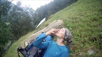 Beeren Trauben essen Pause Picknick Alpen Italien Südtirol E5 Wandern Berge