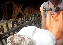 Frisches Brot Bauernhof Alpen Italien Südtirol E5 Wandern Berge