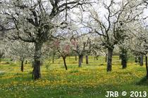 Les vergers d'Aquitaine