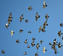 Kombinierte Technologien zur effektiven Vogelabwehr.