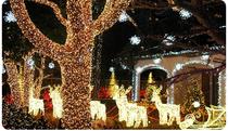 Gli alberi della casa di Babbo Natale