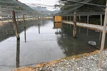 ホンモロコ養魚池~住江のホンモロコ