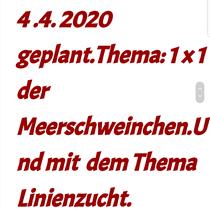 Quelle: https://meerschweinchenhobbyclub.jimdofree.com/