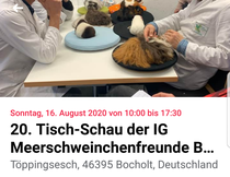 Quelle: https://facebook.com/events/s/20-tisch-schau-der-ig-meerschw/279131809812852/?ti=cl