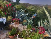 Immer wieder entdeckt man magische Details im Garten des Hauses.