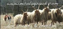 www.nicolagiraudi.com