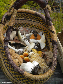 Körbe voller Pilze waren das Ergebnis der Exkursion
