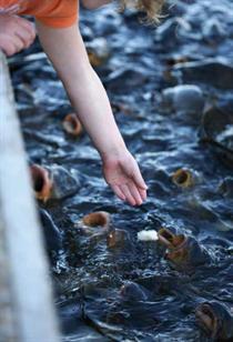 In Aquakulturen treten die gleichen Probleme auf wie in der Massentierhaltung. Oft werden zudem Antibiotika eingesetzt, um Krankheiten zu unterdrücken. Foto:www.istockphoto.com/Kameleon007