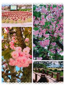 長崎  🌸大村公園🌸