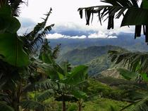 Auf Panorama Tour durch die nordwestliche Kaffeezone - Anden - Kolumbien