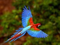Reisebaustein Amazonas - Leticia